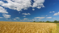 Clouds above the wheat field at sunny day - FullHD time lapse 48434574