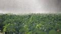 农业 农场 农作 48436050