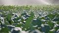 农业 农场 农作 48436054