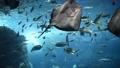 水族館 大水槽 日本の魚 48444116