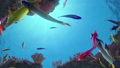 Seamless loop of fish swimming around a coral reef 48461229