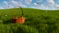 Basket with easter eggs on grass and butterflies 48519417