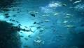 水族館 大水槽 日本近海の魚 48553426