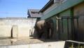 アジアゾウ 動物園 飼育個体 48553439