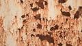 สีสนิมสนิมสนิมสีสนิมเหล็กพื้นผิวเสื่อมสภาพพื้นหลังสนิมเหล็กสีโลหะที่อยู่อาศัย 48567453