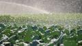 农业 农场 农作 48578712