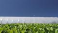 农业 农场 农作 48578724