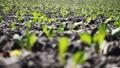 农业 农场 农作 48578732