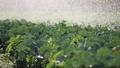 农业 农场 农作 48578807