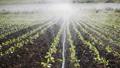 农业 农场 农作 48580454