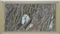 モモンガとブラインドカーテンのCGを合成したアニメーション 48586422
