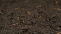 Growing green barley grass 48633773