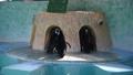 マゼランペンギン 動物園 48647091