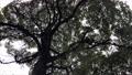 くもり空と木 48647366