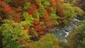 ตุลาคม Hachimantai ในฤดูใบไม้ร่วงใบไม้ - ทิวทัศน์จากสะพาน Morino 48723745