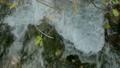 Fast river stream 48735781