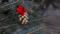 Gilded pine cone in Christmas tree 48762769