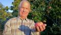 Elderly Farmer Agronomist Holding A Ripe Apple In The Garden In Light Of Sunset 48812004