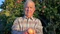 Elderly Farmer Holds Ripe Apples In His Hands The Background Of Garden 48812554