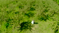 Happy Bride and groom in the apple orchard in summer sunny day ,aerial shot. 48841341