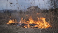 Fire destroys the reeds on the river Bank. Burning dry reeds by the river. 48871786