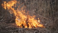 Burning Dry Reeds by the River. 48871792