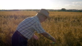 Farmer Businessman In Cowboy Hat On The Field Checks The Ripening Of Grain Crops 48873585