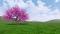 Spring landscape with blooming sakura cherry tree 48874324