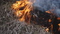 Ash of burnt grass in the fire. Fire flame motion close up. 48879095