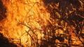 Close Up Of Flames From Burning Dry Plants 48879103