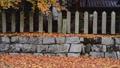 深秋的風景(落葉和石垣) 48882775