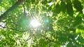 녹색 이미지 수면에서 반사 잎이 반짝 반짝 빛나는 녹색 이미지 48918637