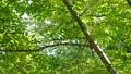 녹색 이미지 수면에서 반사 잎이 반짝 반짝 빛나는 녹색 이미지 48918644