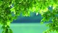 湖畔のブナの若葉 48952110