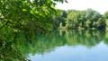 녹색 이미지 수면에서 반사 잎이 반짝 반짝 빛나는 녹색 이미지 49007251