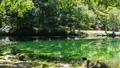 녹색 이미지 에메랄드 그린의 늪과 녹색 패닝 49007254