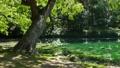 녹색 이미지 에메랄드 그린의 늪과 녹색 49007256