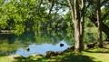 녹색 이미지 에메랄드 그린의 늪과 녹색 49007259