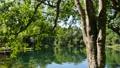 녹색 이미지 에메랄드 그린의 늪과 녹색 49007264