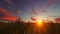 Wheat field against beautiful sunset 49021524