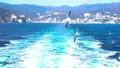 Sea and seagulls 49178097
