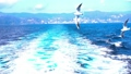 Sea and gulls 2x slow motion 49178099