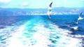 海とカモメ 2倍スローモーション 49178099