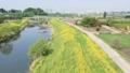 空撮 見沼田んぼ 芝川の春 菜の花 49366972
