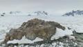 Antarctic coast gentoo penguin group aerial view 49381405