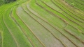 Flying over Rice Terraces. Aerial View 49432388