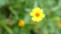 Beautiful blooming yellow flower in the garden. Summer time. slow motion. 3840x2160 49448768