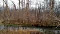 令人惊叹和杂草丛生的树木和河流 49468820