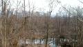 长满的树和河移动的射击鸟瞰图 49468872