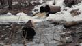 Drain pipes, environmental pollution. Drainage system flood protection. Environmental Protection 49588031
